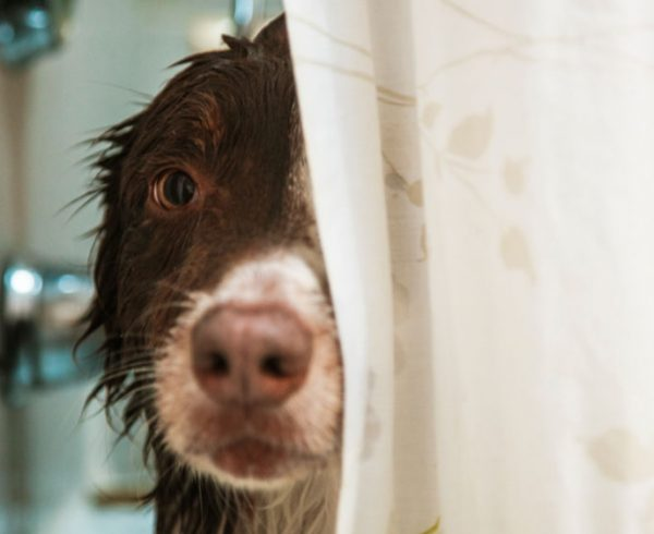 wet-dog-in-shower-081816-HERO