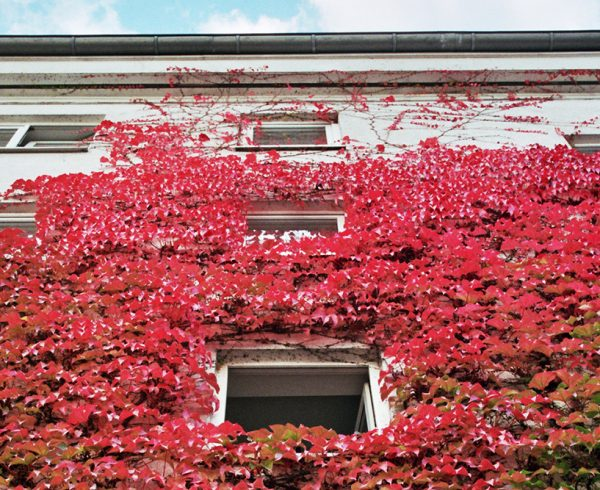 Ivy-Covered-Apartment-Building-11-3-Hero